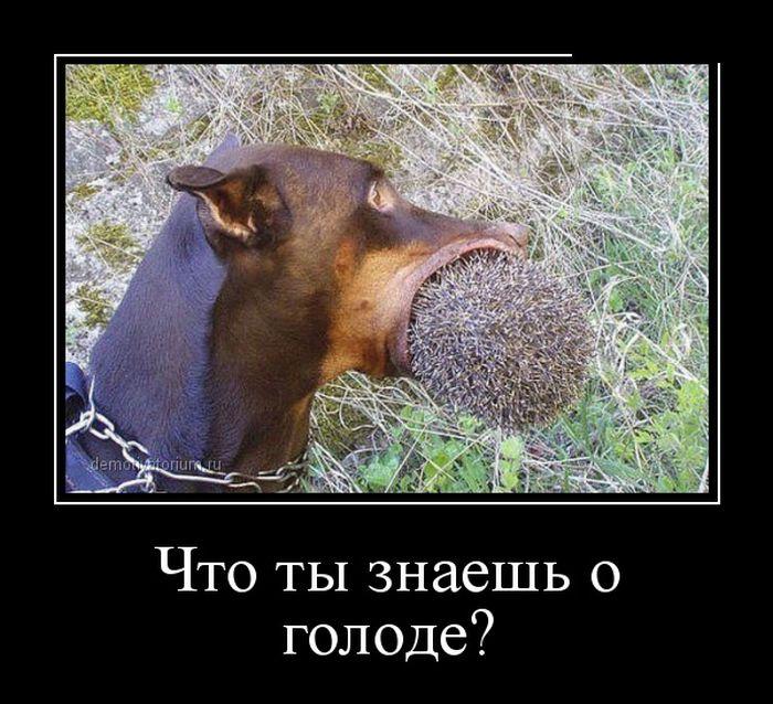 ПОДБОРКА ПРИКОЛЬНЫХ ДЕМОТИВАТОРОВ за 25.03.15