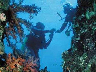 На затонувшем древнем корабле в Атлантическом океане нашли самый крупный в  ...
