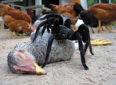 Страшные животные и насекомые 32 фото