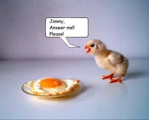 Что можно сделать из яиц (11 фото)