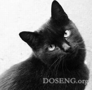 В Италии появится День защиты черных кошек