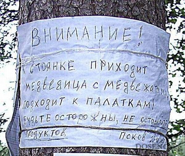 Чат на дереве (2 фото)