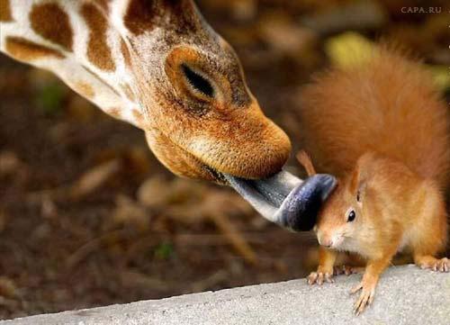 позитивные картинки с животными: