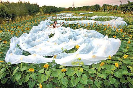 Свадебное платье длиной 200,8 м