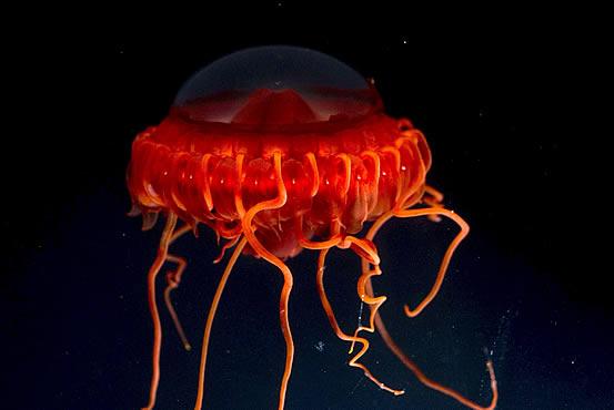 Жители подводного мира (14 фото)