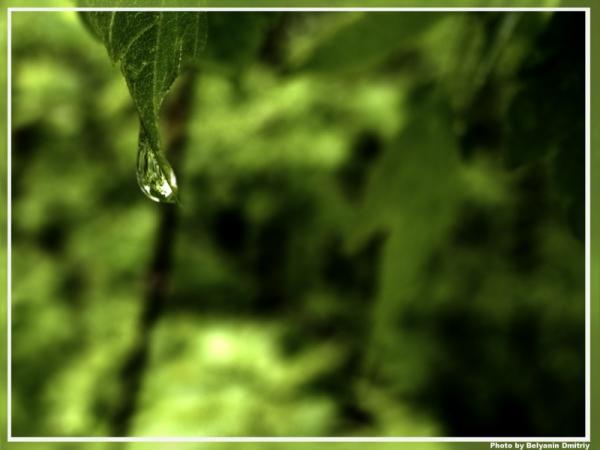 После дождя (22 фото)