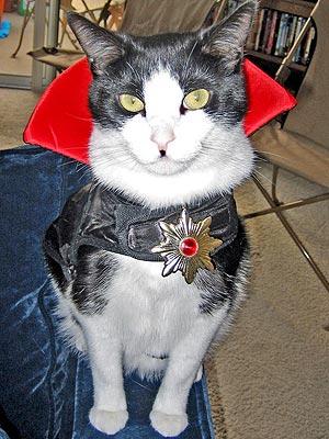 Животные примеряют костюмчики для Helloween (34 фото)