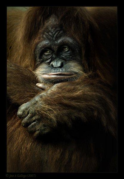 Дикие животные - фотограф Jose Callego