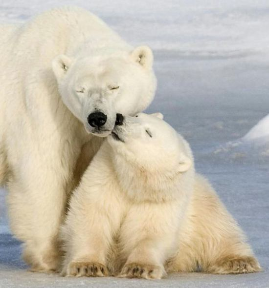 Полярная любовь (10 фото)