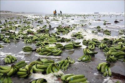 Голландские острова накрыло бананами