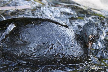 Ужасные последствия шторма в Керченском проливе (2 фото)
