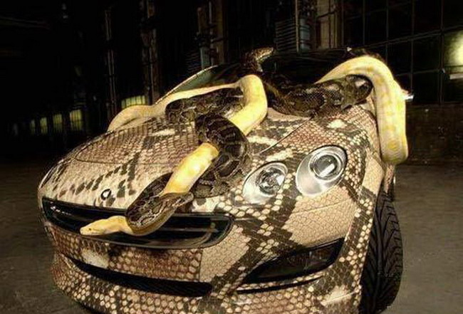 Среднеазиатская кобра фото папки