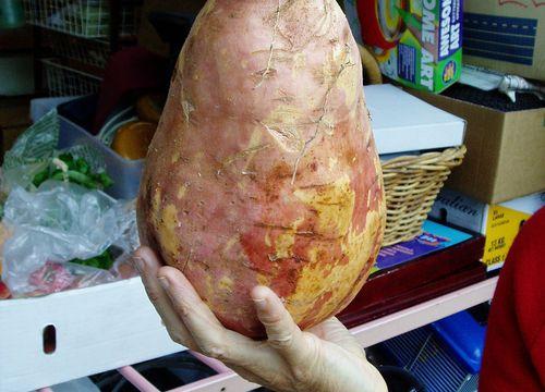 Самое большое картошка