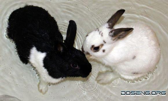 Позитивные кролики (20 фото)
