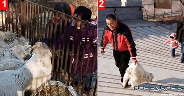 Атракцион в Китайском зоопарке