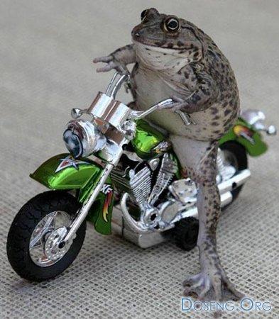 Дрессированная лягушка (10 фото + текст)