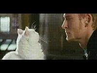 Кот-глушитель