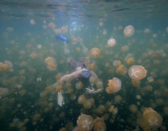Озеро Медуз в Палау (10 фото)