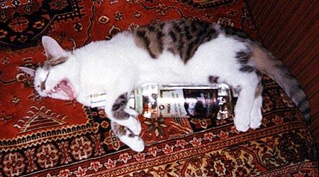 Смешные кошки 33 фотки