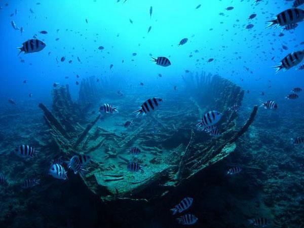 Удивительный подводный мир (16 Фото)