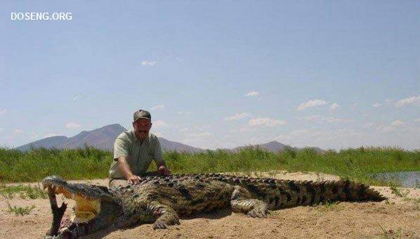 Что можно найти у крокодила в брюхе! (5 фото)
