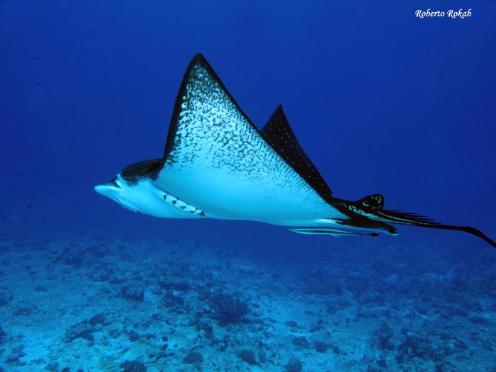 Подводный мир манит своими