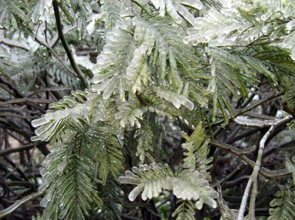 Ледяной дождь (18 фото)