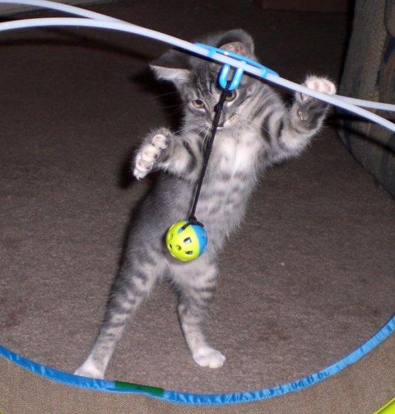 Подборка котят (47 фото)