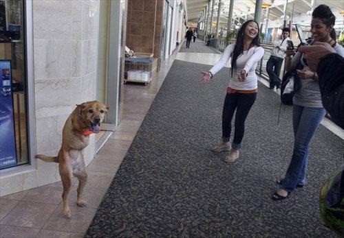 Собака на двух ногах (16 фото)