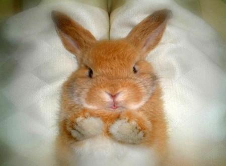 Просто рыжий кролик ))