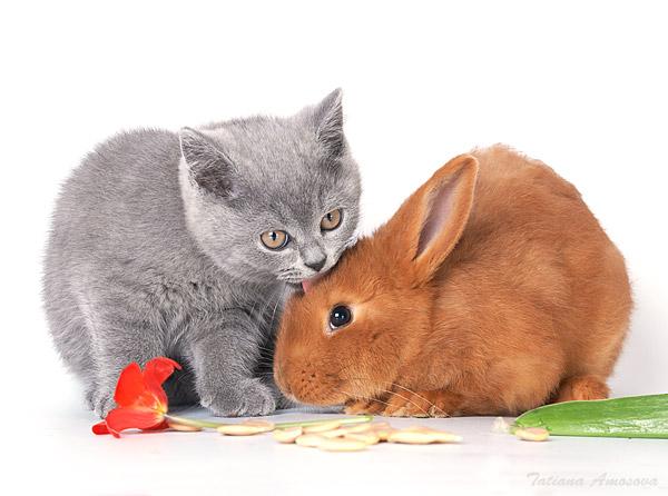 успеху, картинка крольчонок с котенком ваших фото