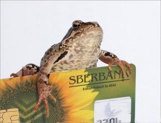 Жаба, которая душит (6 фото)