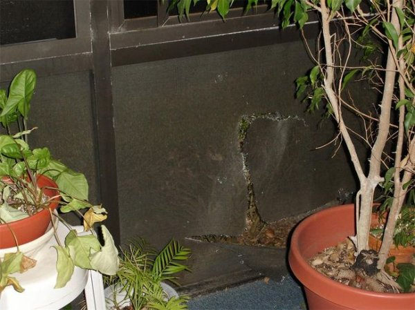 Нежданный гость (4 фото)