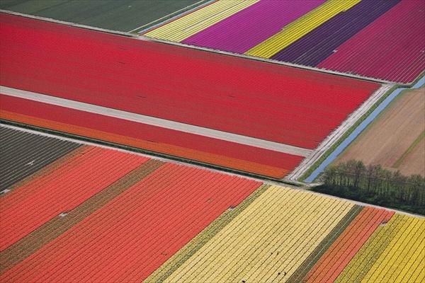 Буйство красок на тюльпановых полях в Голландии