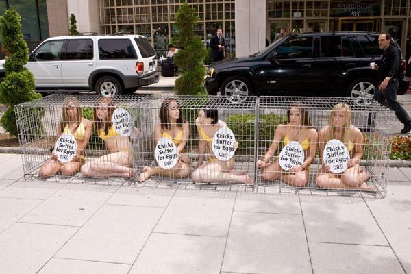 PETA: девушки в клетках и пет-модель Penthouse