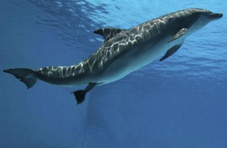 Роды дельфинов!!