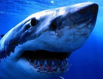 Турция опровергла информацию о закрытии курортов из-за акул