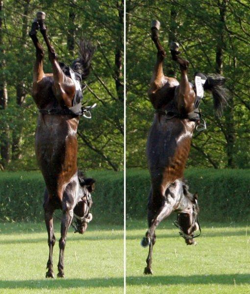 Лошадиная гимнастика