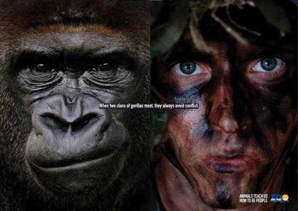 Животные научат нас быть людьми. (7 фото)