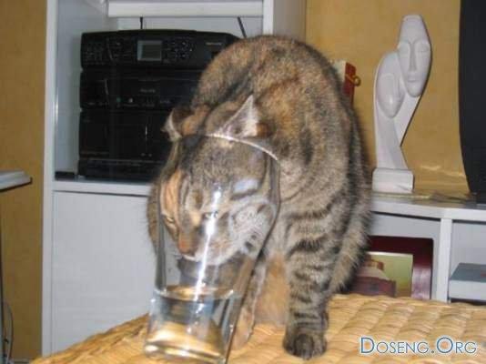 Коты отжигают