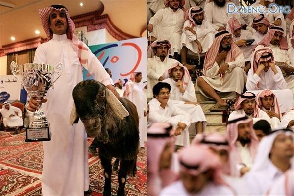 Выставка козьей красоты в Эр-Рияде, Саудовской Аравии