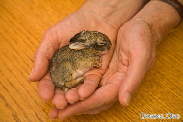Кролик, которому 40 грамм (8 фото)