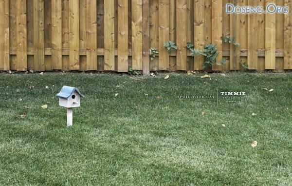 Побалуйте вашу кошку (2 фото)