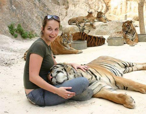Ручные тигры Таиланда