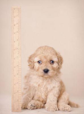 Портреты собак от Rachel Hale