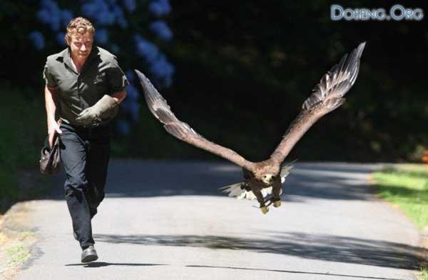 Джордж Хейдж и его ручной орел Эви