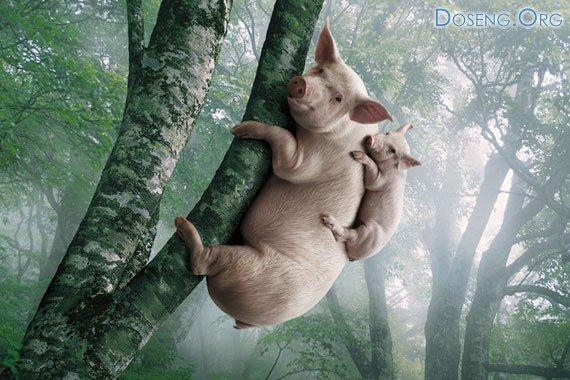 Забавные животные от студии LSD s.r.l