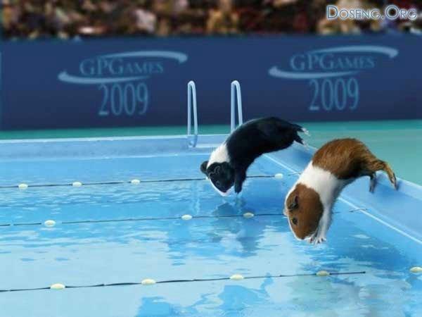 Олимпийские свинки. 9 фото