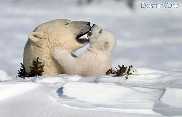 Лучшие фото дикой природы