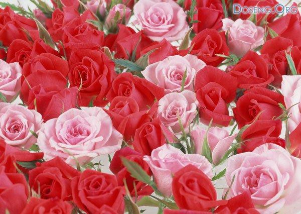 С Днем Ангела! Поздравления форумчан - Страница 2 1219309375_003
